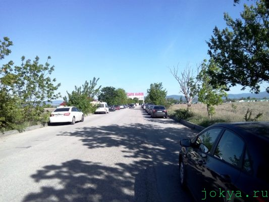 Дорога через парк сафари львов Тайган фото заметка о Крыме jokya.ru