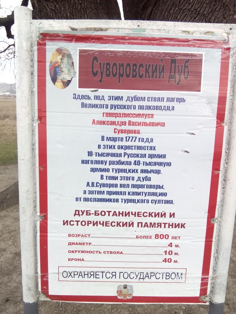 Дуб суворовский в Крыму фото сюжет от jokya.ru