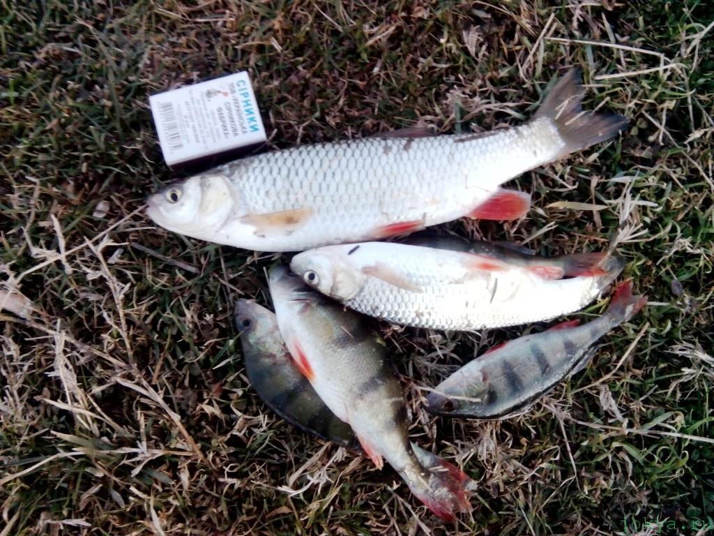 Где ловиться рыба под вечер на биюк-карасу в Белогорске фото сюжет jokya.ru