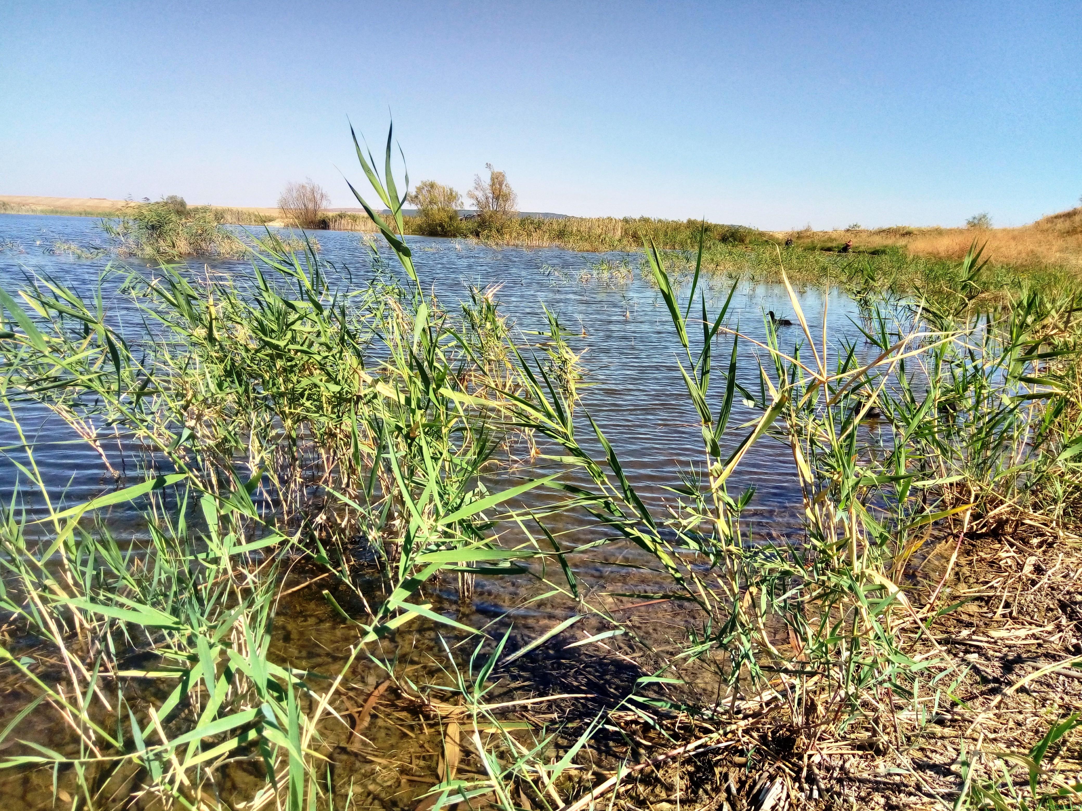 Карасевый пруд: реальная рыбалка фото заметка из моей реальности в Крыму jokya.ru
