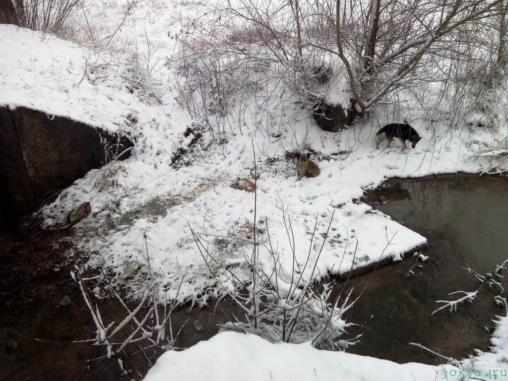 Мост через реку сарысу в субботу фото сюжет jokya.ru