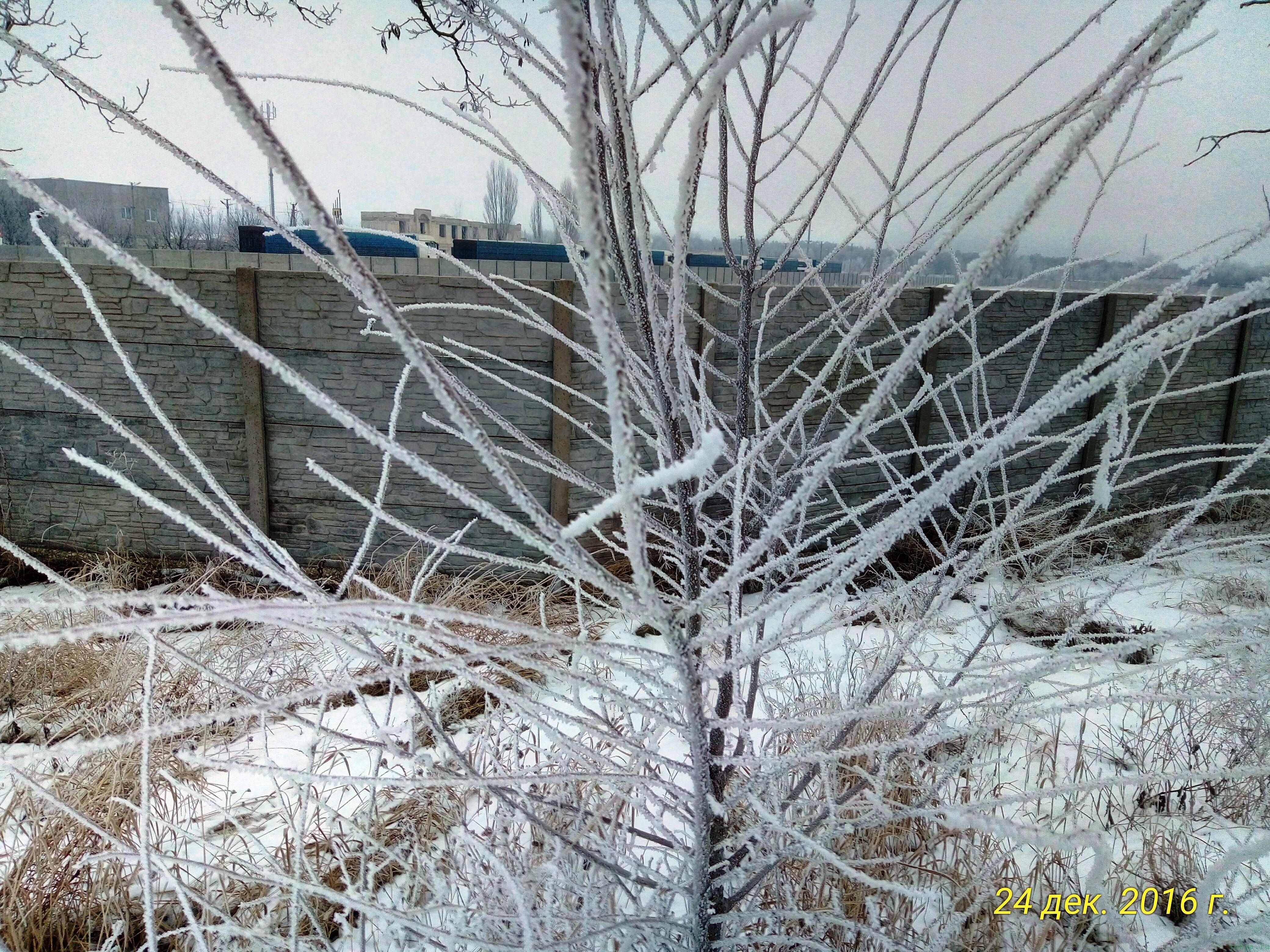 Открытие городской новогодней Елки 2016-2017 года фото заметка о реальности в Крыму jokya.ru