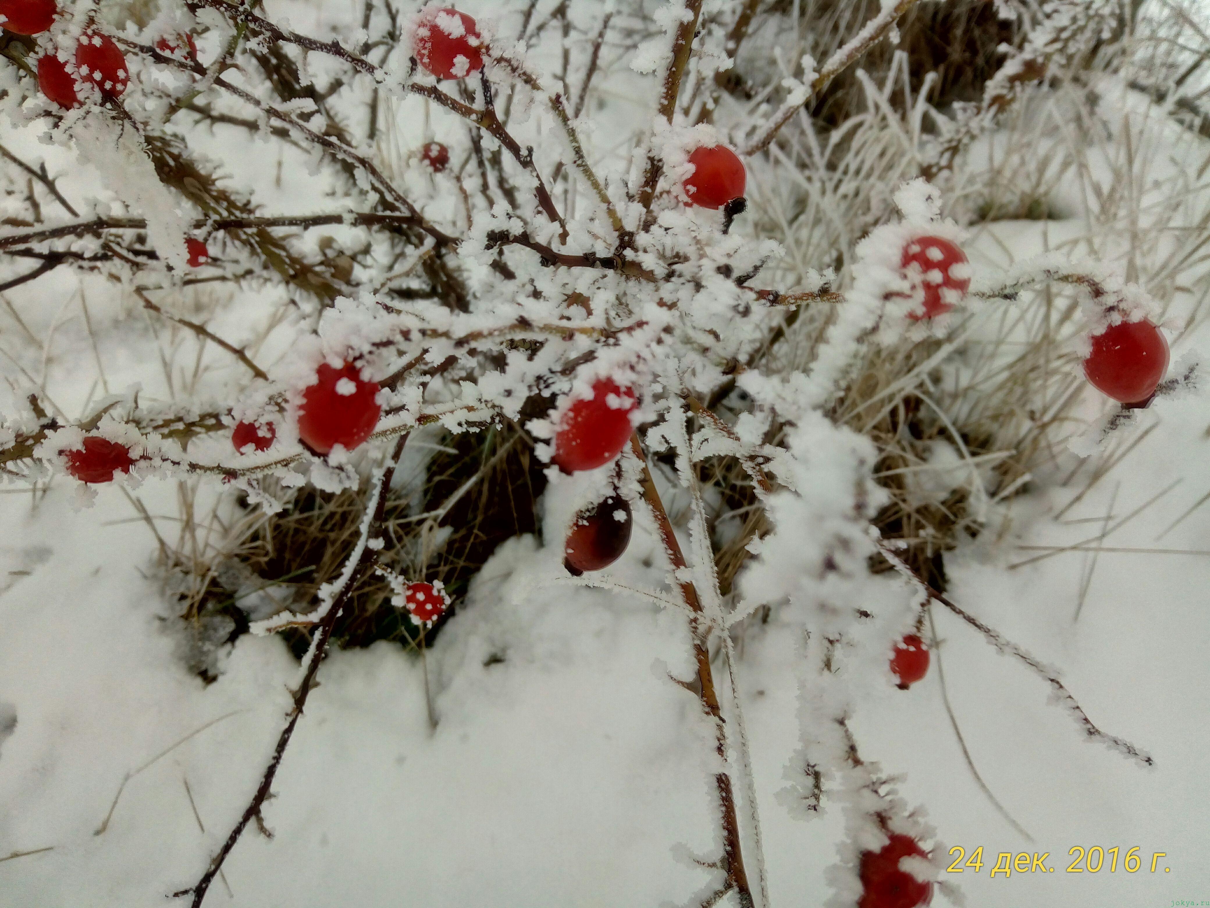 Прогулка по местности без цели по снегу: фото заметка о реальности в Крыму jokya.ru