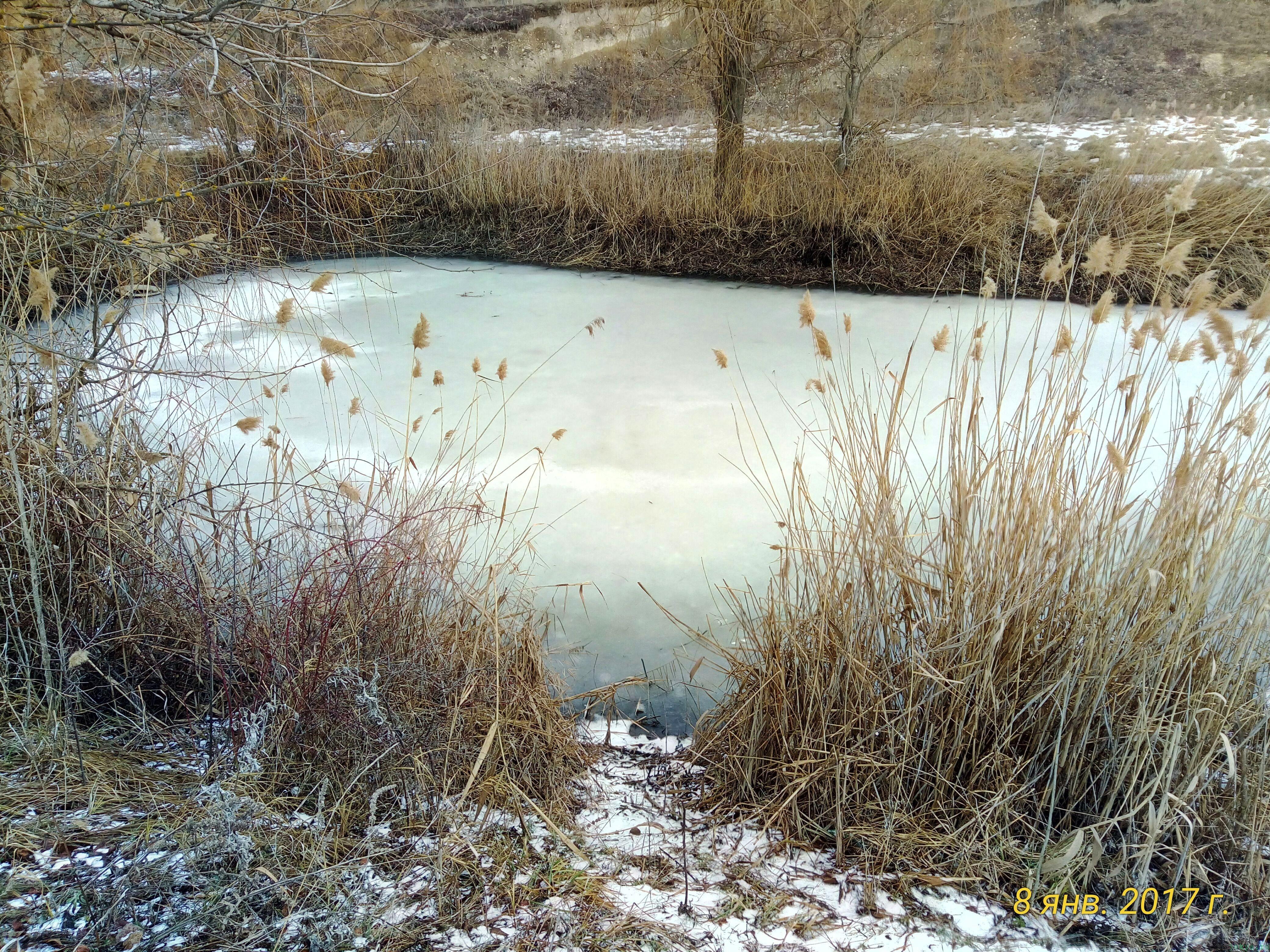Пруд зимою «Дурдомовский»: ловля зимой на пруду фото заметка о моей реальности в Крыму jokya.ru