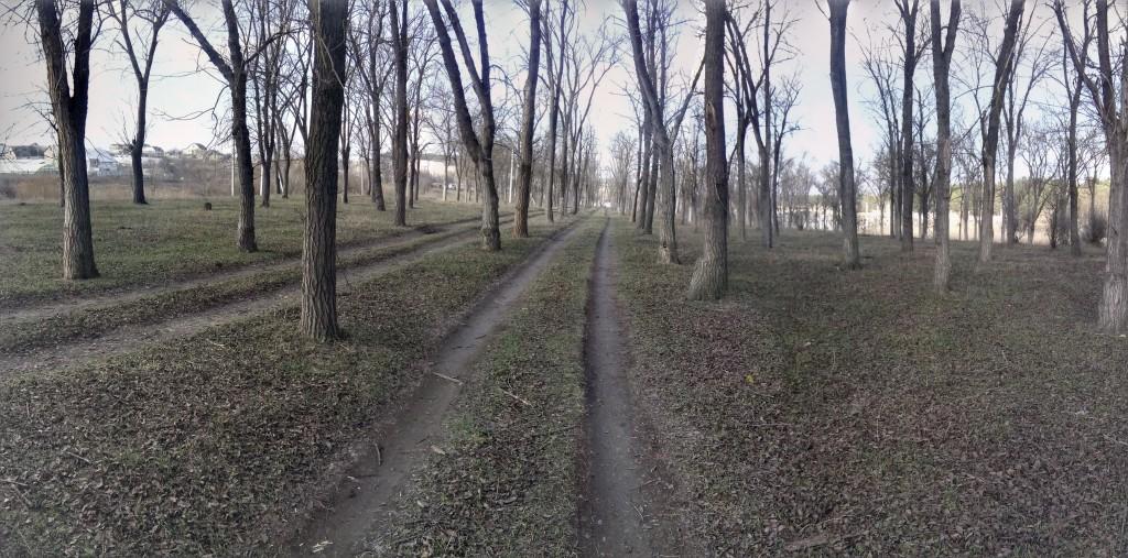 Рэсовский карагач фото от jokya.ru