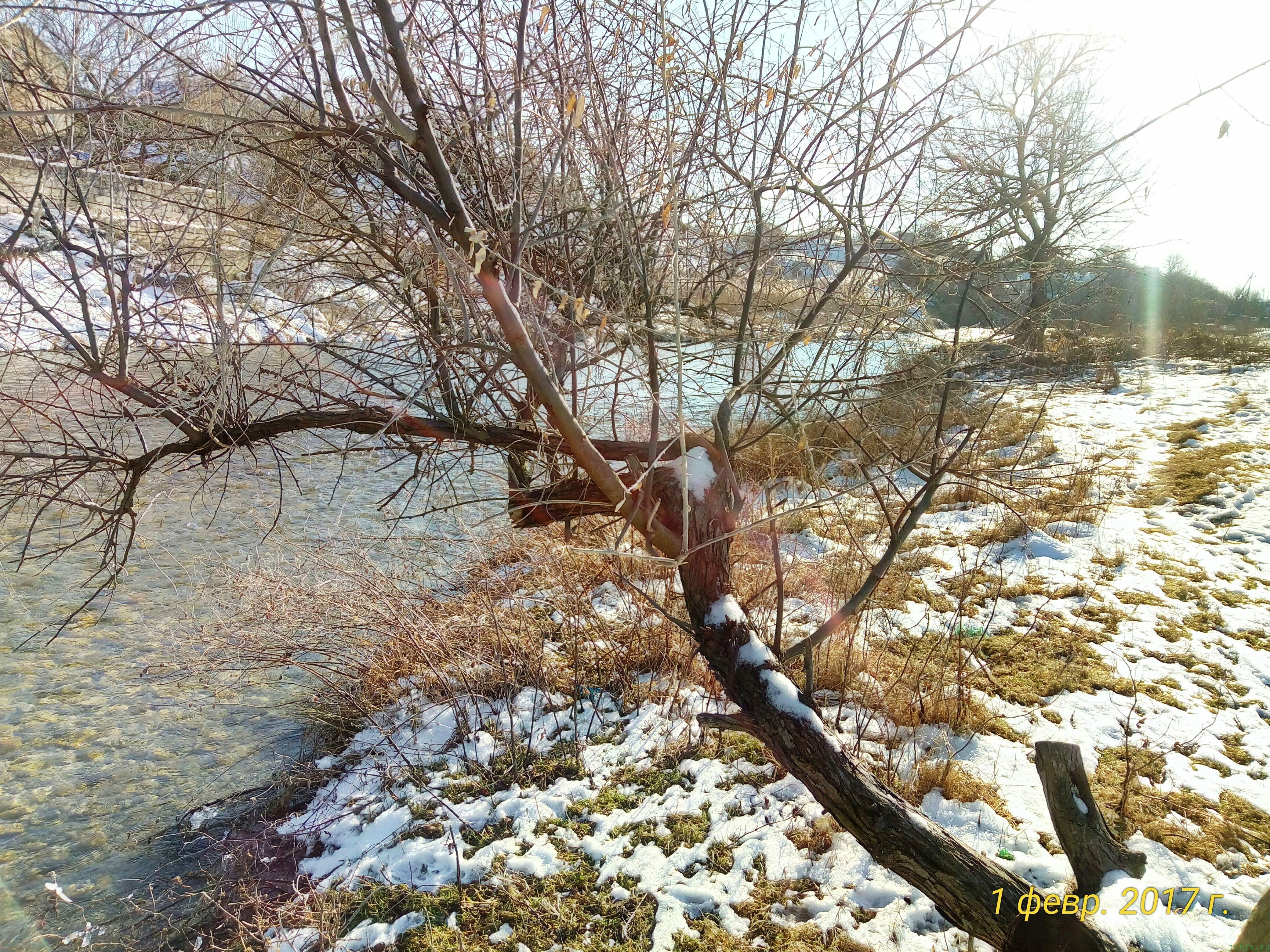 Река Биюк карасу 1 февраля: фото реки фото заметка моей реальности в Крыму jokya.ru