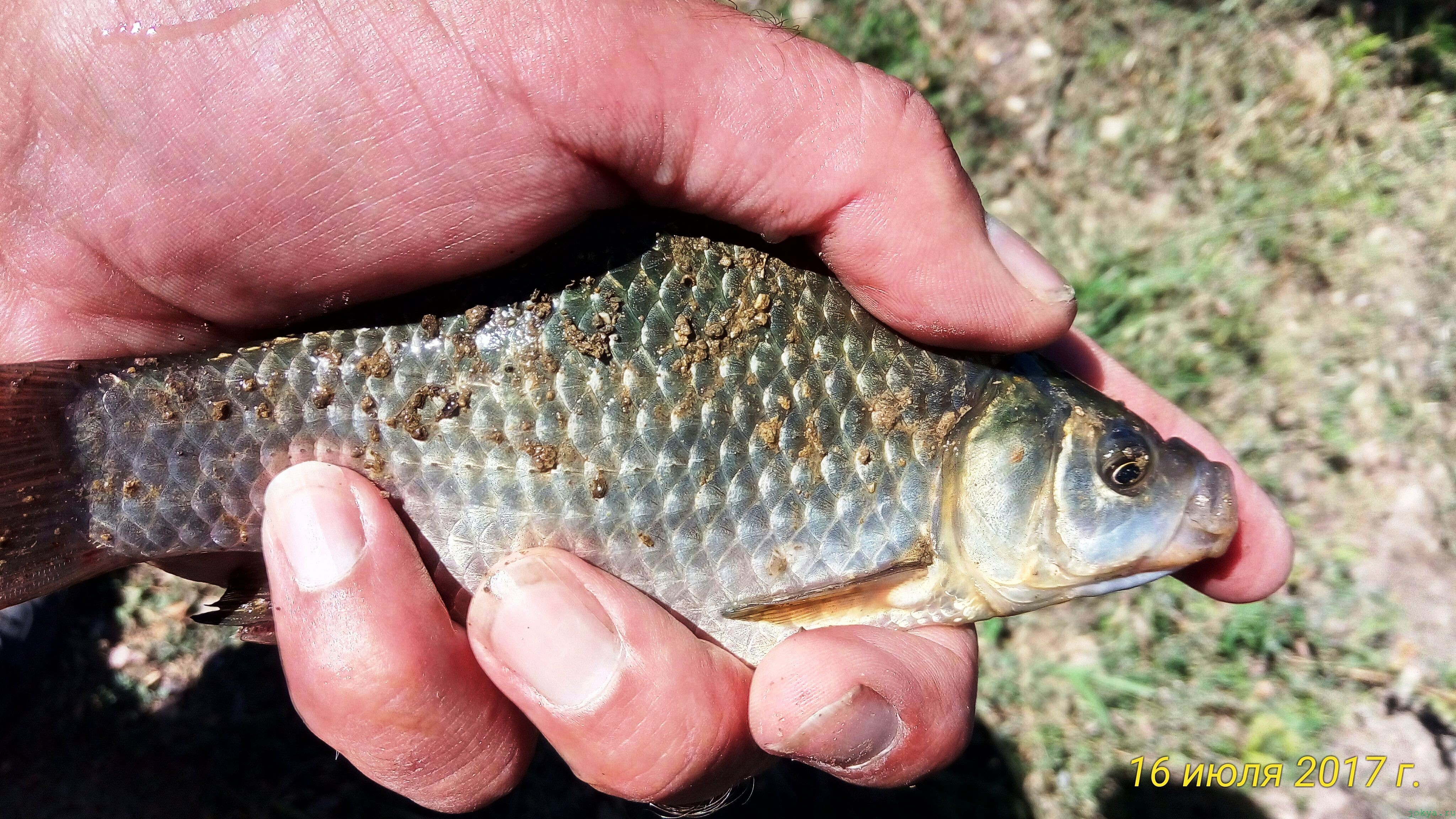Рыбалка на озере: отдых рыбалка фото заметка о моей реальности в Крыму jokya.ru
