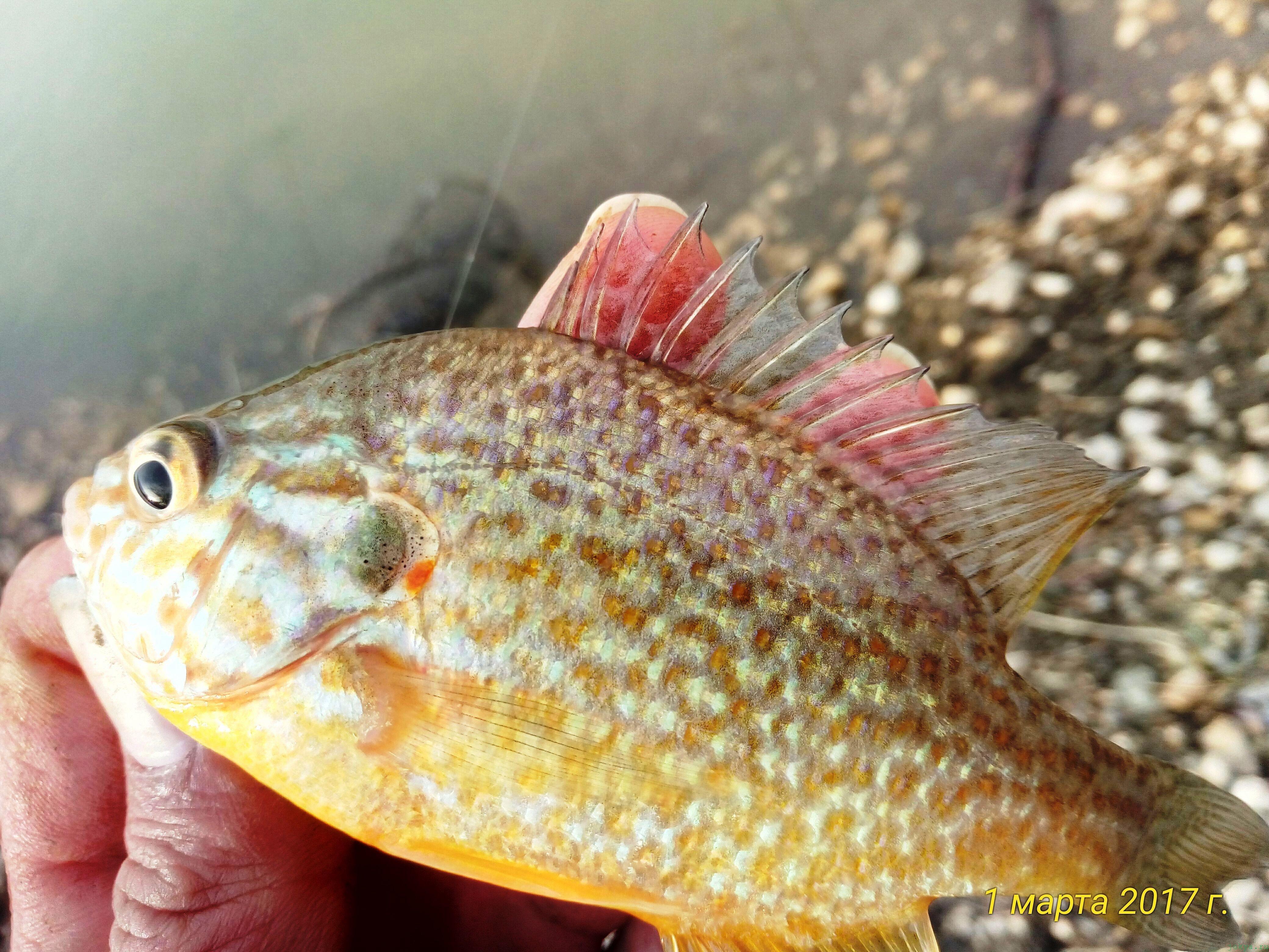Рыбалка на водоеме «Квадрат»: фото заметка о моей реальности в Крыму jokya.ru