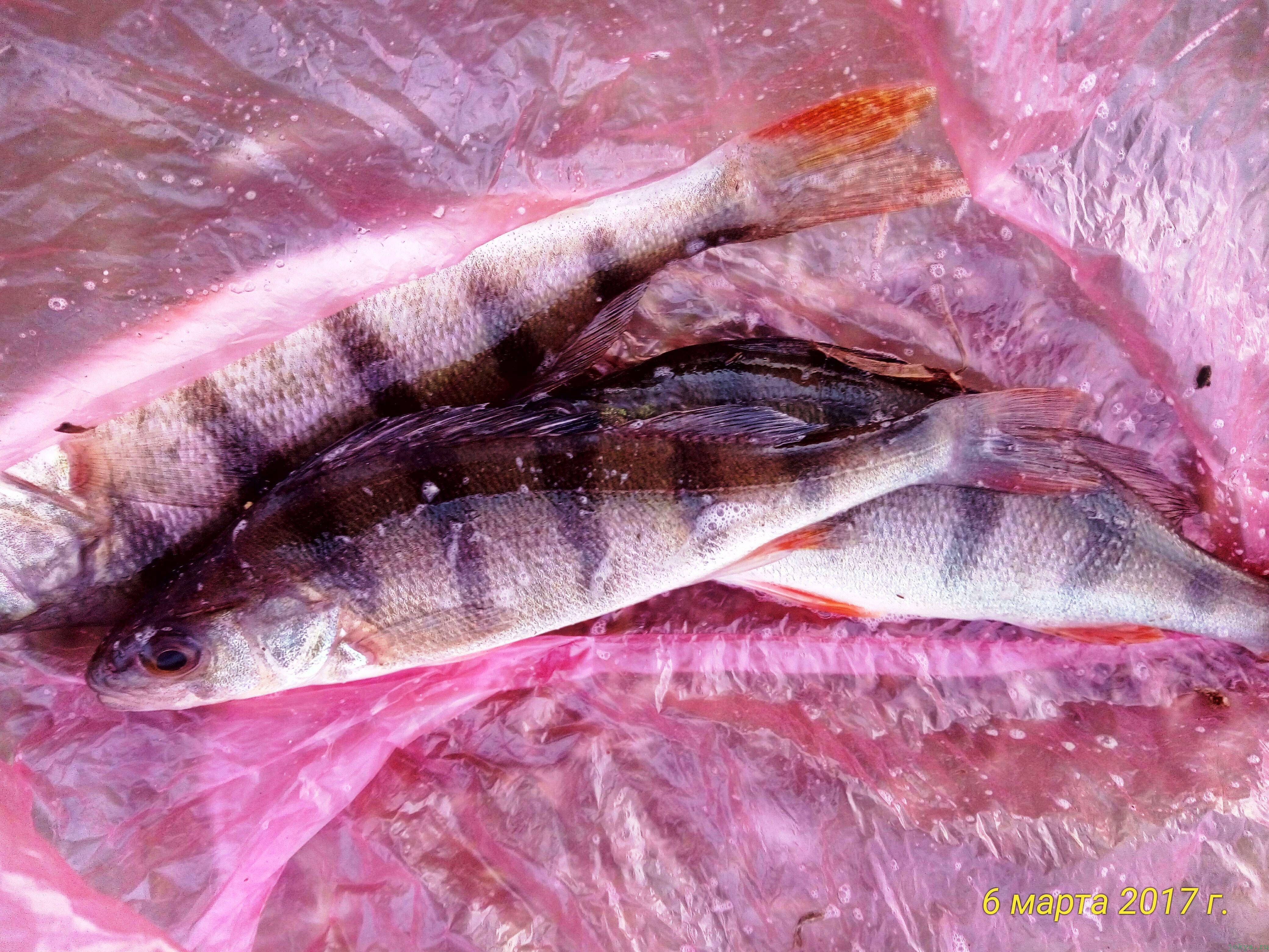 Рыбалка с берега на реке Карасевка под вечер фото заметка о моей реальности в Крыму jokya.ru