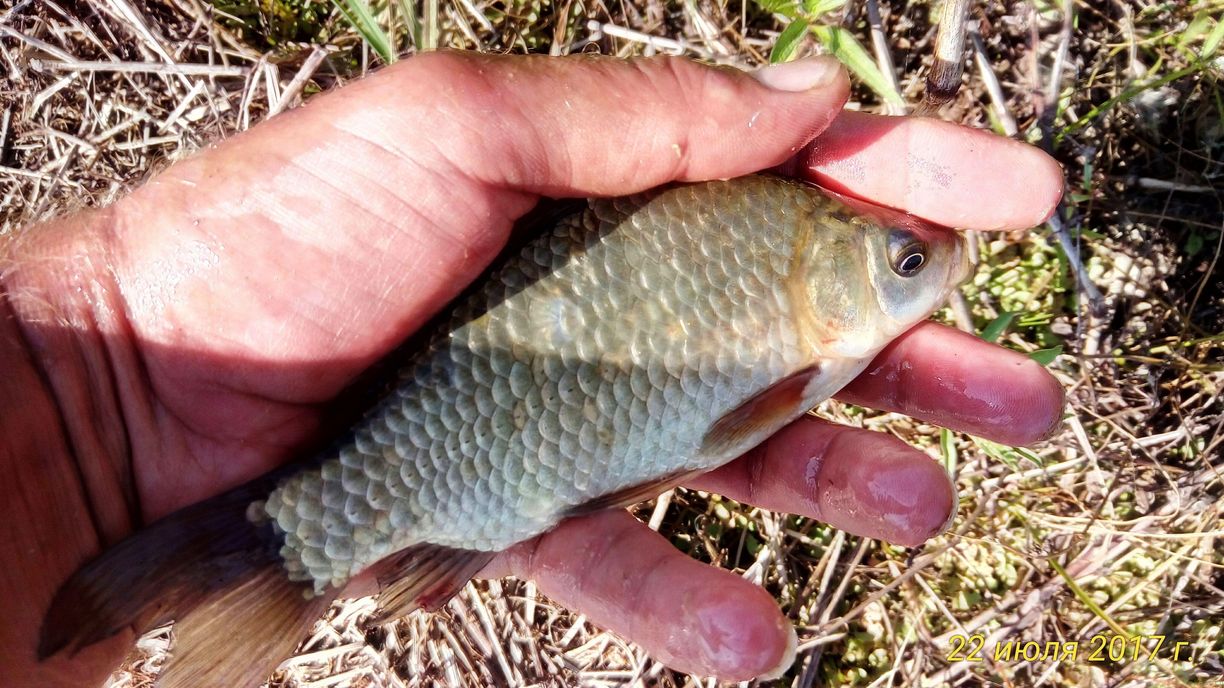 Рыбалка с берега на удочку фото заметка о моей реальности в Крыму jokya.ru