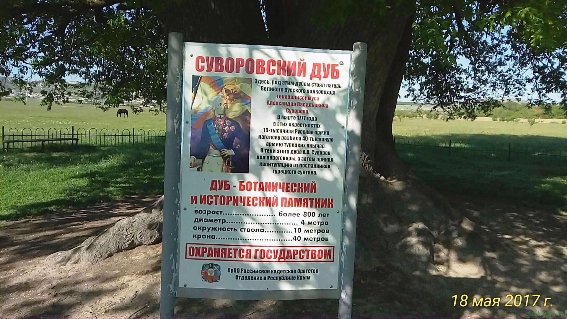 Суворовский дуб в Крыму Белогорск фото заметка о моей реальности в Крыму jokya.ru