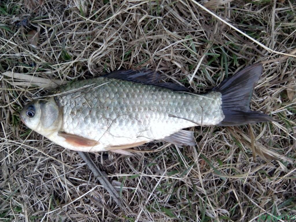 Водоем копанка: рыбалка осенью в Чернополье фото сюжет jokya.ru